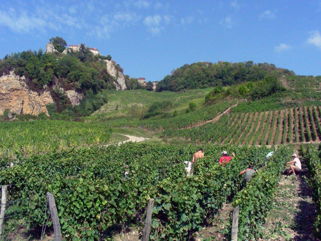 Vignes Château-Chalon